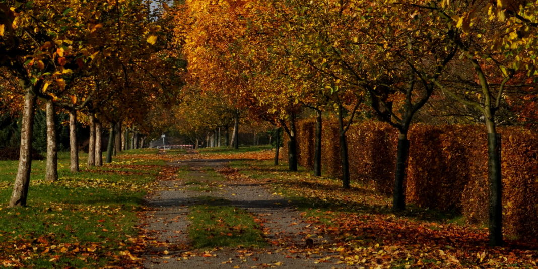 Park Botaniczny Pankow-Blankenfeld w Berlinie (Botanischer Volkspark) :: Joanna Maria Czupryna, Przewodnik po Berlinie
